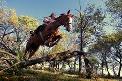 Menina com cavalo do puro-sangue imagens de stock