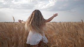Menina com corridas bonitas longas do cabelo através do campo de grão maduro com os spikelets dourados do trigo na colheita do ou filme