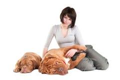 Menina com dois cães Imagens de Stock Royalty Free