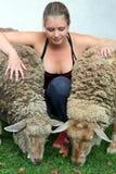 Menina com dois sheeps Fotografia de Stock