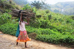 Menina com firewoods Imagens de Stock