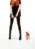 menina com o cão do terrier de brinquedo Fotos de Stock Royalty Free
