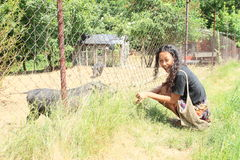 Menina com porcos Foto de Stock