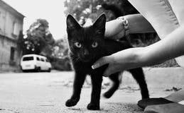 Menina com tomado um gatinho preto fotografia de stock royalty free