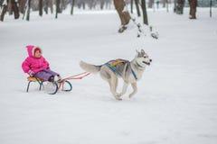 Menina com um cão para a caminhada no inverno Imagem de Stock