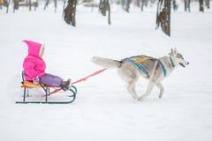 Menina com um cão para a caminhada no inverno Foto de Stock