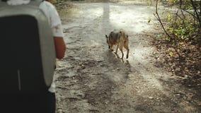 Menina com a xícara de café e o cão que apreciam uma caminhada na pessoa bonita do forestFemale e o cão mixbreed que vai ao longo vídeos de arquivo