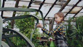 A menina concentrada está lavando as folhas da grande planta sempre-verde com a garrafa do pulverizador dentro da estufa Negócio  filme