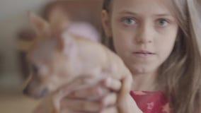 Menina consideravelmente feliz pequena do retrato do close-up que guarda um cachorrinho bonito da chihuahua e que joga com ele na filme