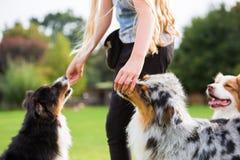 A menina dá a dois cães um deleite fotos de stock