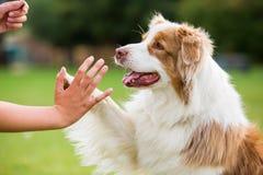 A menina dá uma elevação cinco do cão Fotos de Stock