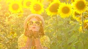 A menina da beleza com suportes vermelhos longos do cabelo no ouro de sopro do ANG do campo amarelo do girassol brilha Mulher fel vídeos de arquivo