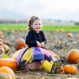 Menina da criança com lote das abóboras no campo Imagens de Stock Royalty Free