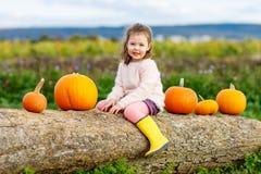 Menina da criança com lote das abóboras no campo Fotografia de Stock