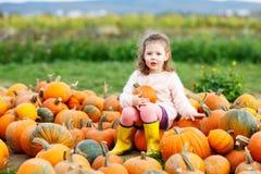 Menina da criança com lote das abóboras no campo Foto de Stock