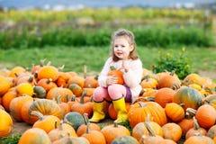 Menina da criança com lote das abóboras no campo Fotos de Stock Royalty Free