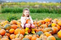 Menina da criança com lote das abóboras no campo Fotografia de Stock Royalty Free