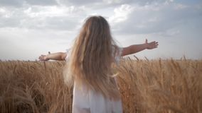 Menina da criança pequena com corridas bonitas longas do cabelo através do campo de trigo com os spikelets dourados da grão na es video estoque