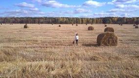 A menina da vista aérea anda no campo colhido com lenço à disposição vídeos de arquivo