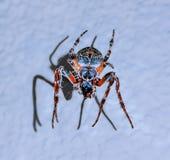 Menina de dança na aranha colorida fotos de stock royalty free