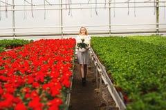 Menina de sorriso nova bonita no vestido, trabalhador com as flores na estufa A menina guarda as flores brancas foto de stock royalty free