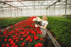 Menina de sorriso nova bonita, trabalhador com as flores na estufa Trabalho na estufa, flores do conceito Copie o espa?o fotos de stock
