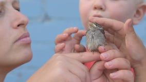 A menina delgada com crianças travou o pintainho do pardal e olhou-o em seus braços video estoque