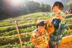 Menina desconhecida do nome que mantém a morango nas mãos na exploração agrícola da morango na manhã feliz Fotos de Stock Royalty Free