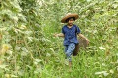 A menina do camponês de Tailândia estava andando nos vegetais do jardim foto de stock royalty free