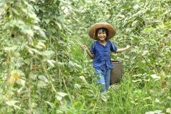 A menina do camponês de Tailândia estava andando nos vegetais do jardim foto de stock