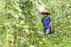 A menina do camponês de Tailândia estava andando nos vegetais do jardim imagens de stock