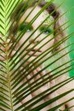 Menina do dríade com fern Imagens de Stock Royalty Free