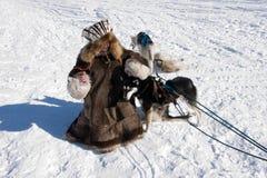 Menina e cão Fotos de Stock Royalty Free