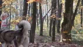 Menina e cão Mulher bonita que joga com seu cão Criança e cão Menina que joga com o cão na menina da floresta com video estoque