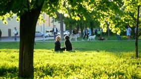 Menina e cão preto grande que sentam-se no gramado no parque, luz solar, na grama verde-clara do primeiro plano vídeos de arquivo