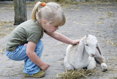 Menina e cabra pequena - close-up fotografia de stock