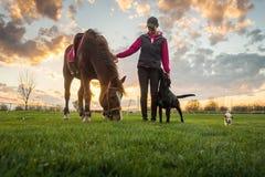 Menina e cavalo imagens de stock
