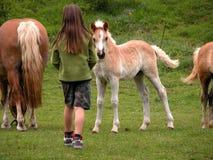 Menina e cavalos Foto de Stock Royalty Free