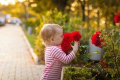 Menina e flores das rosas Fotos de Stock