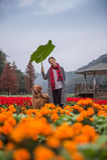 Menina e golden retriever nas flores Fotografia de Stock