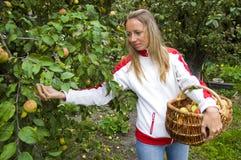 Menina e maçãs Imagem de Stock