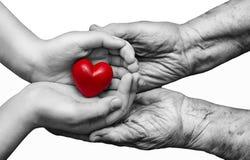 Menina e mulher idosa que mantêm o coração vermelho em suas palmas t fotos de stock