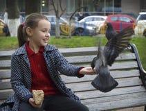 Menina e pombos Fotos de Stock Royalty Free