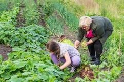 Menina e sua avó Imagens de Stock
