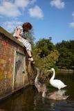 Menina e uma família das cisnes Fotografia de Stock
