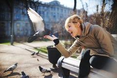 Menina em pombos de alimentação de um banco das mãos Foto de Stock
