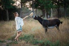 Menina em um asno de alimentação do bom humor grama seca Foto de Stock Royalty Free