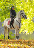 Menina em um cavalo branco Fotos de Stock Royalty Free