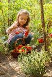 Menina em um jardim vegetal Foto de Stock