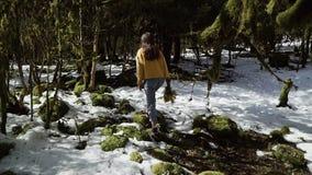Menina em um revestimento amarelo com um ramalhete de caminhadas da mimosa através da floresta da neve na primavera video estoque